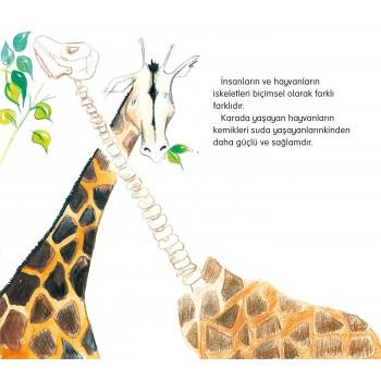 Fen & Doğa Dizisi - İskelet Ve Kemikler
